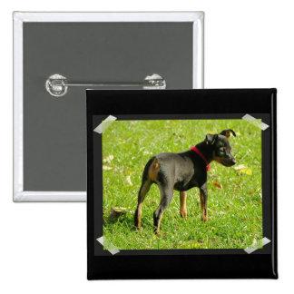 Doberman Puppies Square Pin