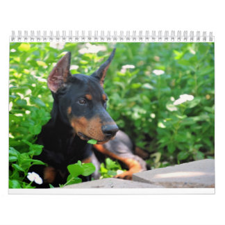 Doberman Puppy Calendar updated 2012