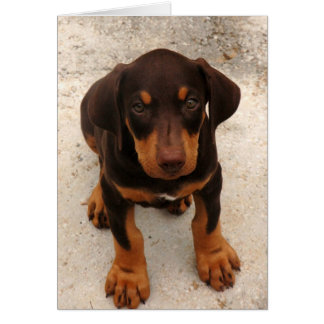 Doberman Puppy Cards