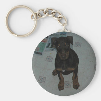 doberman puppy keychain