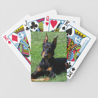 Doberman Puppy Playing Cards
