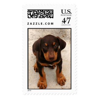 Doberman Puppy Postage