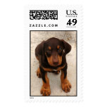 Doberman Puppy Postage Stamps
