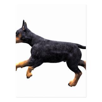 Doberman Puppy Running Postcard