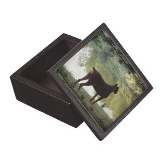 Doberman que pasa por alto un lago caja de recuerdo de calidad