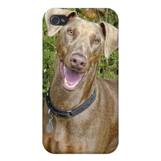 Doberman Rescue Fawn iPhone 4/4S Covers