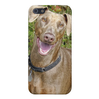 Doberman Rescue Fawn iPhone 5 Covers