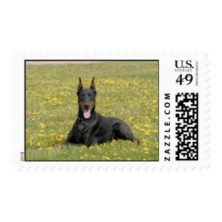 Doberman stamp