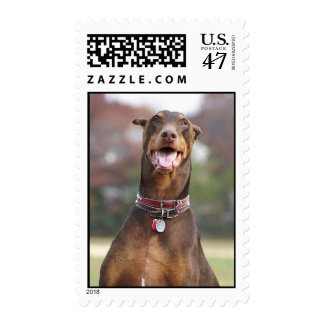 Doberman Stamp
