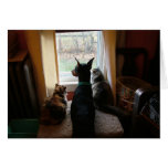 Doberman y gatos tarjetón