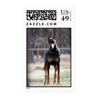 DOBERMANNS FOREVER STAMP