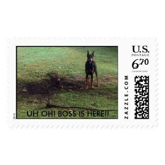 dobie stamp!! get your stamp today at zazzle .com!