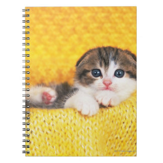 Doblez del escocés; es una raza del gato con un libros de apuntes con espiral