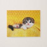 Doblez del escocés; es una raza del gato con un rompecabezas con fotos