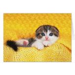 Doblez del escocés; es una raza del gato con un tarjeta de felicitación