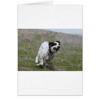 Doc, English Setter Card
