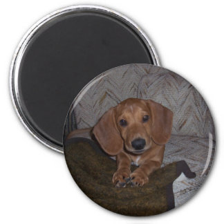 Doc the Dachshund Doxie Magnet