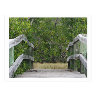 Dock leading into green mangrove stand postcard