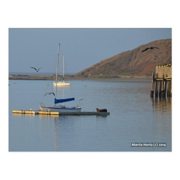 Dock Seal Wakes   Blue Beach Song™ Postcard