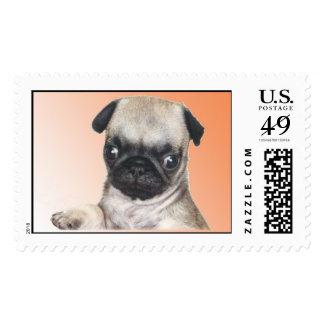 Doc's Buddy with Pug Spirit! Postage Stamp