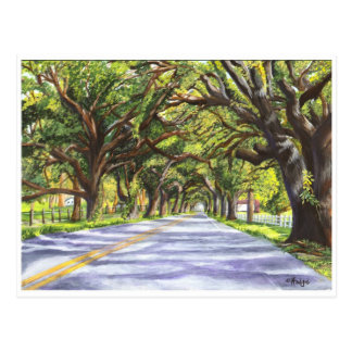 Docville Oaks Postcard