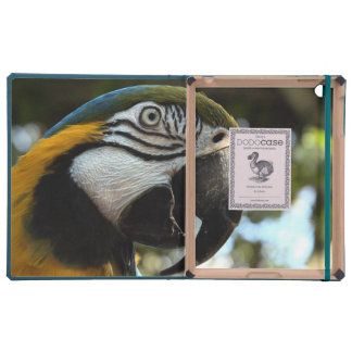 Dodo del Macaw del azul y del oro