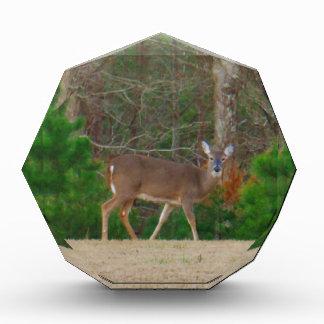 Doe a Deer & Pine Trees Awards
