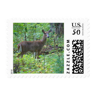 Doe A Deer Postage