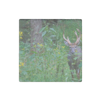 Doe A Deer Stone Magnet