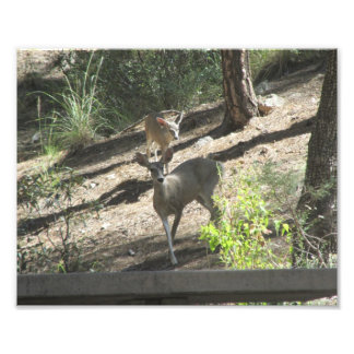 Doe and Her Fawn Photo Print