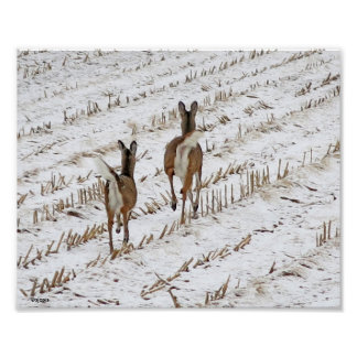 Doe and Yearling in a Snowy Cornfield II Poster