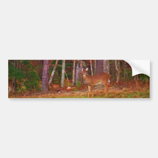 Doe at the woods bumper sticker