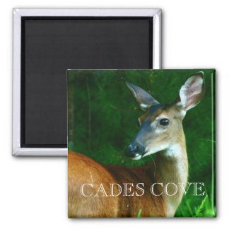 Doe Deer Buck Cades Cove Great Smoky Mountains Magnets