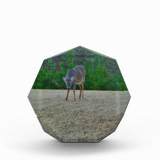 Doe / Deer on a winter golf course Award