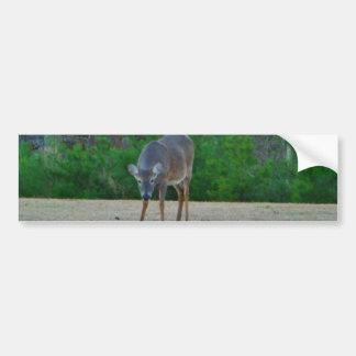 Doe / Deer on a winter golf course Bumper Sticker