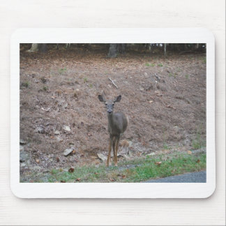 Doe Deer on the Pine straw Mouse Pad