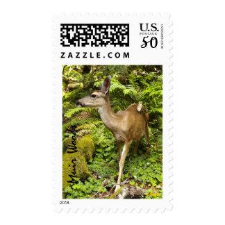 Doe in Muir Woods Postage