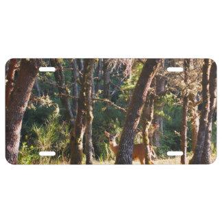 Doe in Nehalem Bay State Park Forest License Plate