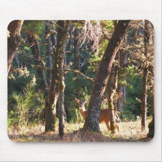 Doe in Nehalem Bay State Park Forest Mouse Pad