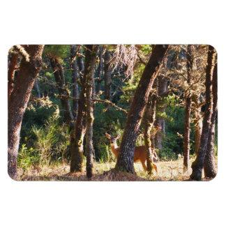 Doe in Nehalem Bay State Park Forest Rectangular Photo Magnet