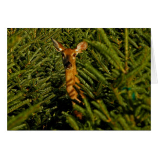 Doe in Pine Trees Note Card
