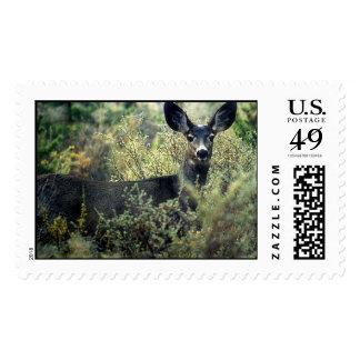 Doe Stamp