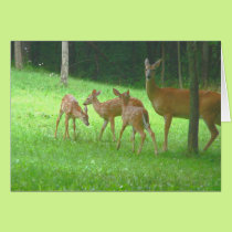 Doe with Triplets Card