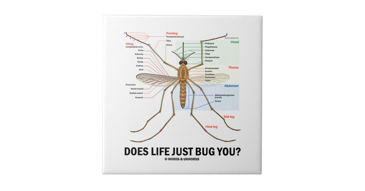 Does Life Just Bug You? (Mosquito Anatomy) Ceramic Tile | Zazzle.com