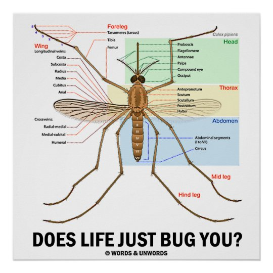 Does Life Just Bug You? (Mosquito Anatomy) Poster | Zazzle.com
