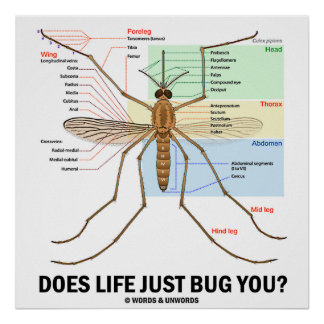 Does Life Just Bug You? (Mosquito Anatomy) Posters