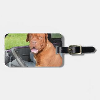 dog-165210.jpg luggage tag
