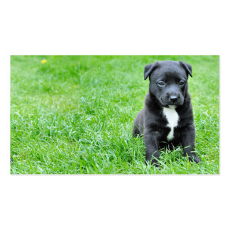 dog-280332 YOUNG DOG BLACK PUPPY ADORABLE PETS GRE Business Cards