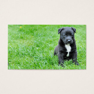 dog-280332 YOUNG DOG BLACK PUPPY ADORABLE PETS GRE Business Card