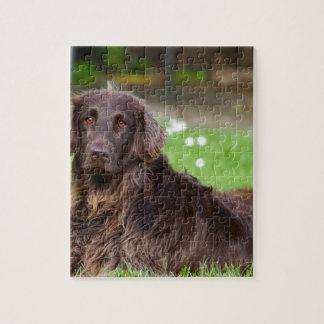 dog-782 jigsaw puzzle